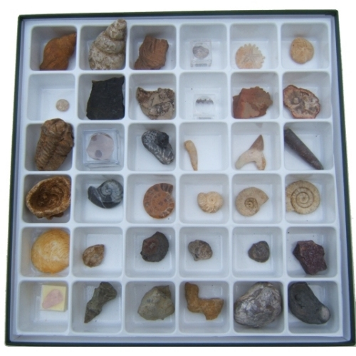 Advanced 36 Specimen Fossil Collection Boxed Set - 2