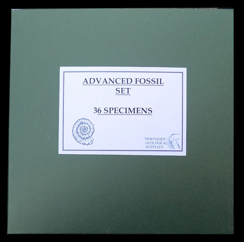 Advanced 36 Specimen Fossil Collection Boxed Set - 1