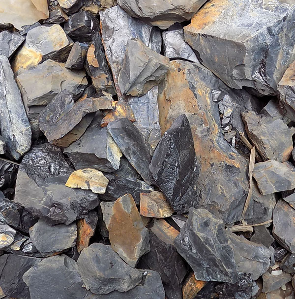 Cannel Coal (1kg)