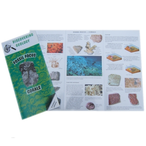 Corals Fossil Focus Guide