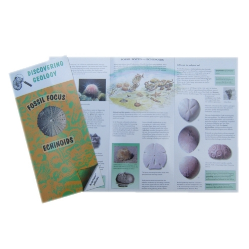 Echinoids Fossil Focus Guide