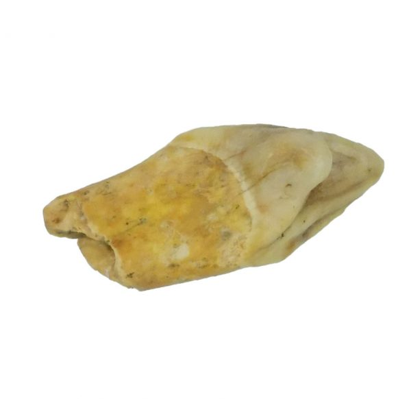Cave Bear Tooth