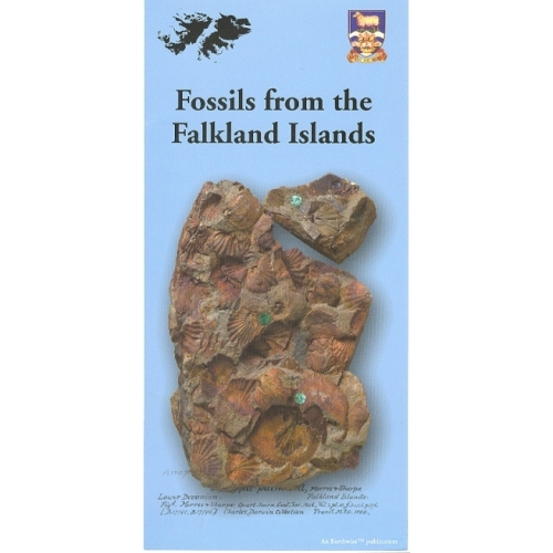 Fossils From The Falkland Islands