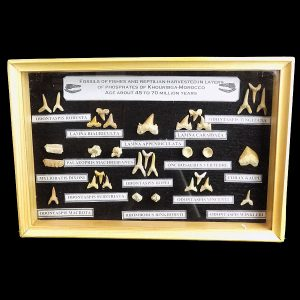 Moroccan Shark and Ray Teeth Fossil Frame