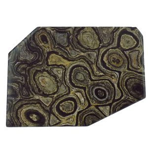 Stromatolite -Polished Slice
