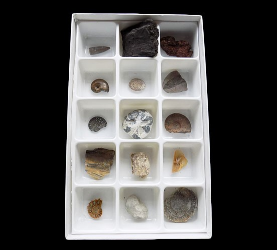 Preservation Fossil Boxed Set - 2