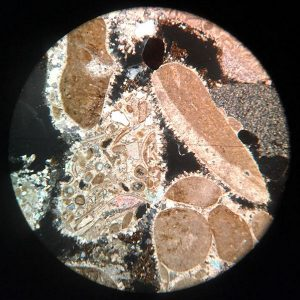 Conglomerate Microscope Slide - Cross Polarised Light