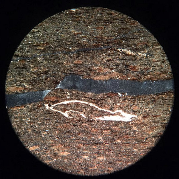 Fossiliferous Shale Microscope Slide - cross polarised light