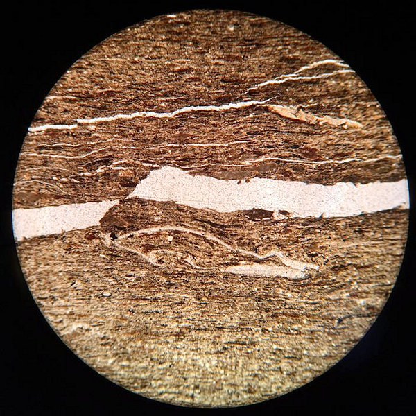Fossiliferous Shale Microscope Slide - polarised light