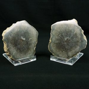Ichthyosaur Vertebra Cut and Polished Matching Pair