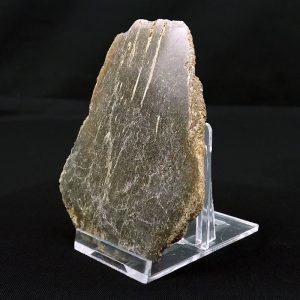 Pliosaur Bone Cut and Polished Specimen 165