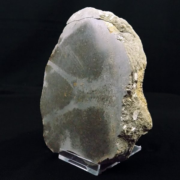 Pliosaur Bone Cut and Polished 650 Grams Right Side View