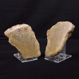 Pliosaur Limb Bone Cut and Polished Matching Pair