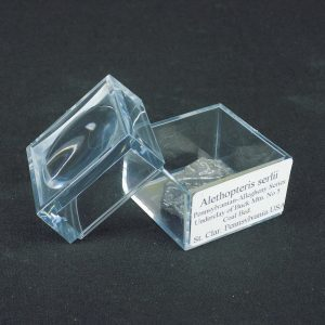 Alethopteris sp. in Magnified Box - 1