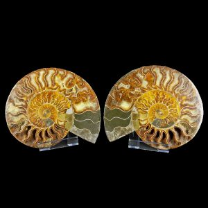 Cut and Polished Ammonite Matching Pair